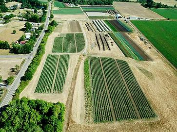hemp fields.jpeg
