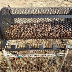 Pecan cage