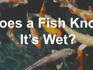 Does a Fish Know It's Wet?