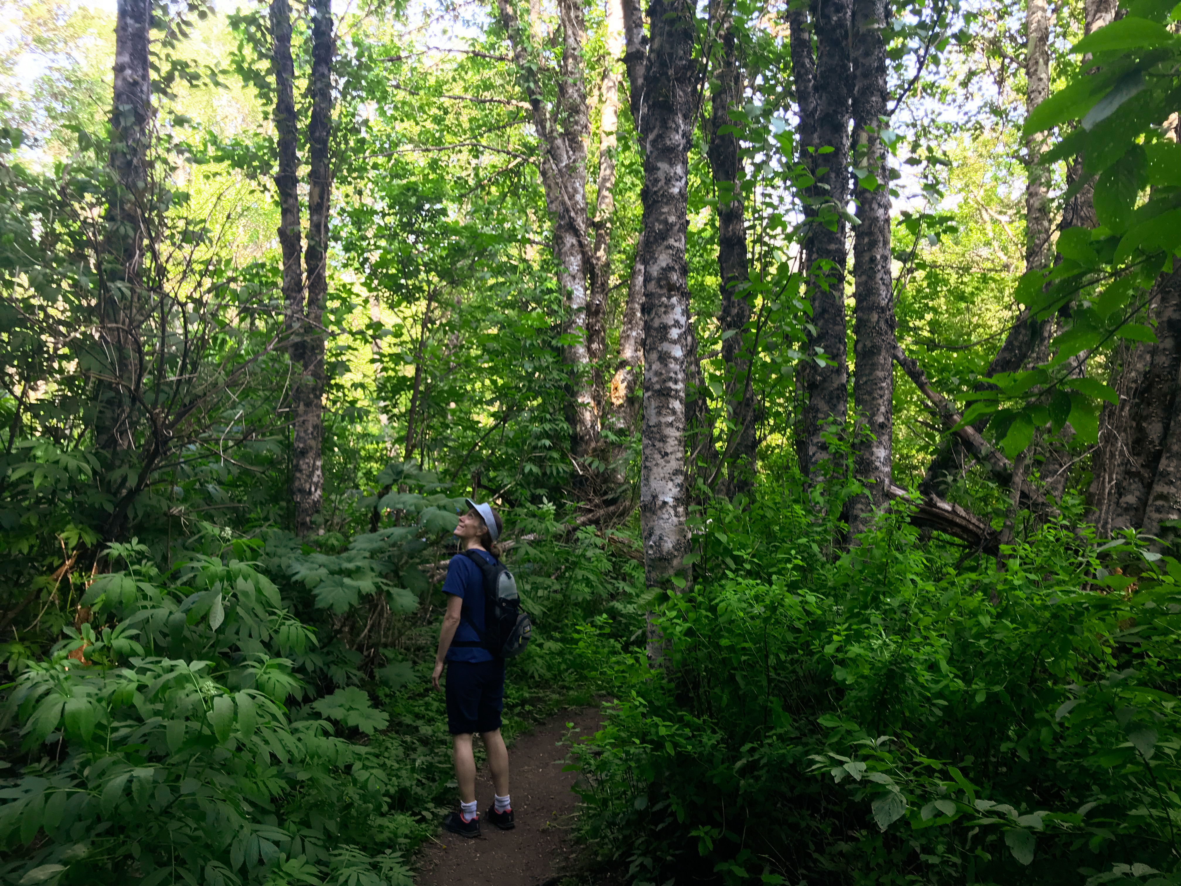 FOREST BATHING PRIVATE GROUP SESSION