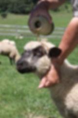 Lamb anointing.JPG