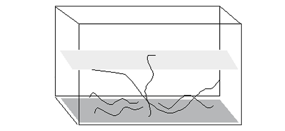 linear arrangement of the left side