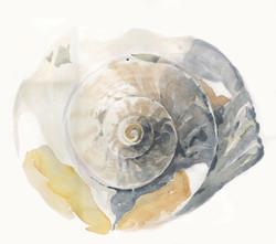 Shell Spiral