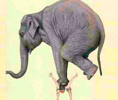 """Excerpt From """"The Elephant"""", A Novel"""