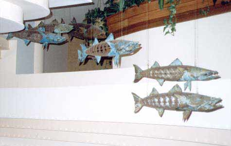 """School of Barracuda"""