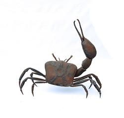 """Fiddler Crab"""