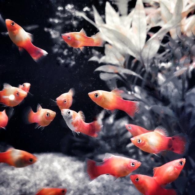 fishes04.jpeg
