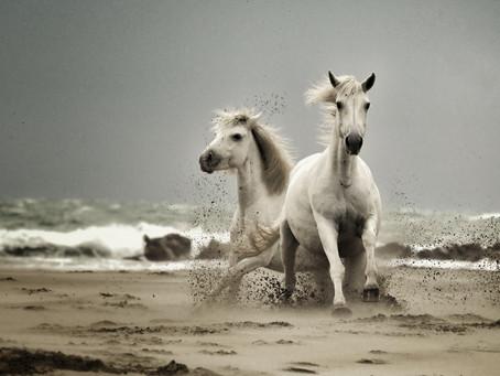 """Premier prix pour un des clichés de la série """"Horses Kami"""". First Award"""