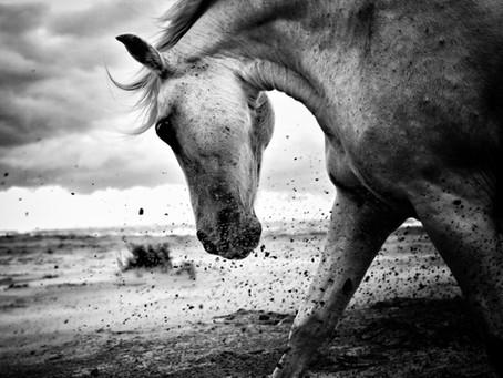 """La série """"Horse Kami"""" sélectionnée au Havre"""