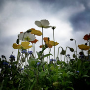 parisflowers.jpeg