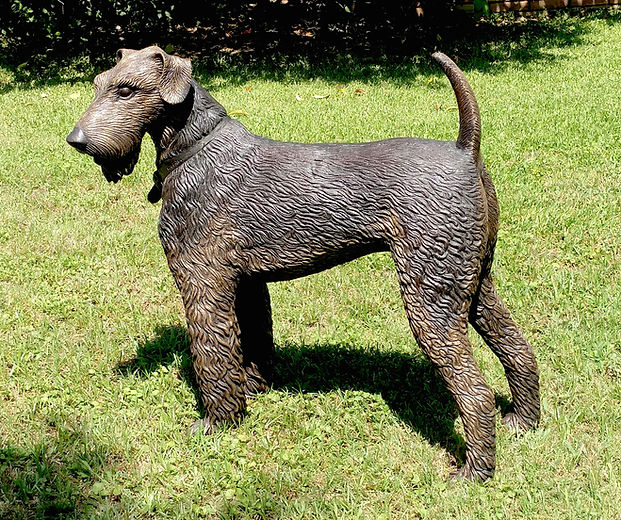 Bronze Airedale Terrier