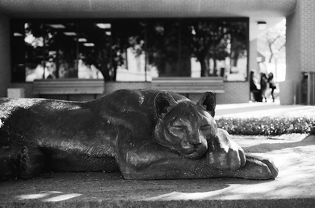 The Sleeping Panther of Fort Worth by Deran Wright