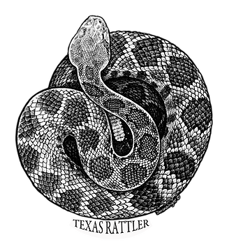 Texas Rattlesnake by Deran Wright