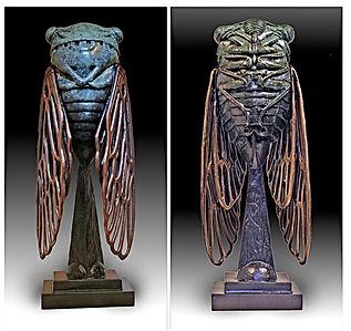 Cicada by Deran Wright