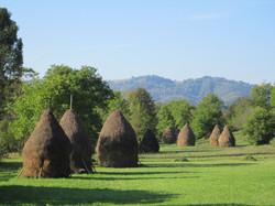 Haystacks near Busteni