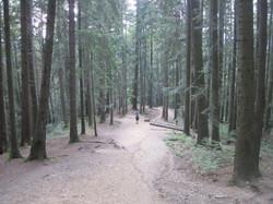 Bucovina Woods