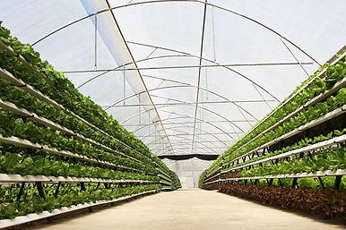 Provision-co-green-house.jpg