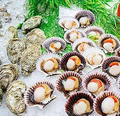 provision-co-fresh-seafood.jpg