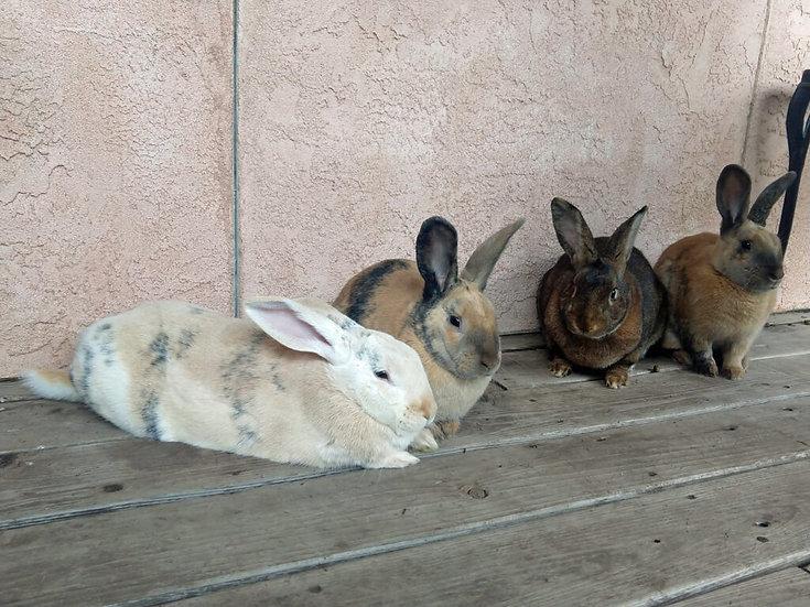 Four bunnies on a deck