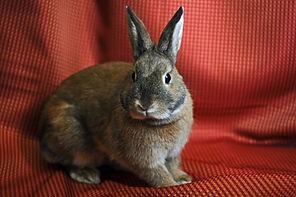 bunnies-molly.jpg
