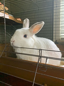 A white bunny in its cage looking at you