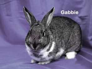 Gabbie