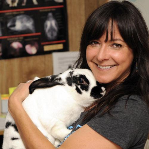 A volunteer snuggling a rabbit