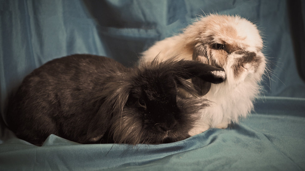 Two very fuzzy lops