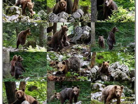 Slovenien - Berge-Wasser-Bären