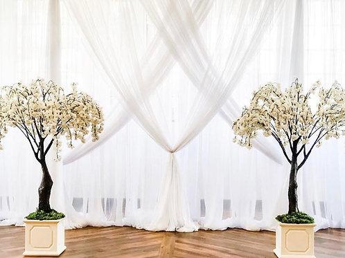 White Flowering Cherry Blossom Trees