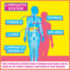 Infographic and information of the bodies lymphatic system