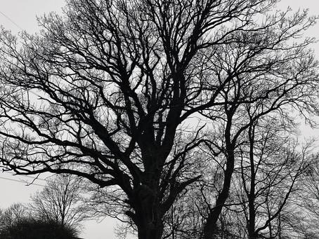 Hvaffor et træ...?