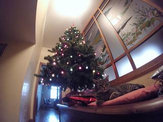 Meooow Christmas!!!