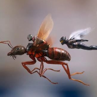 """Foram divulgadas novas imagens de """"Homem Formiga e a Vespa"""""""