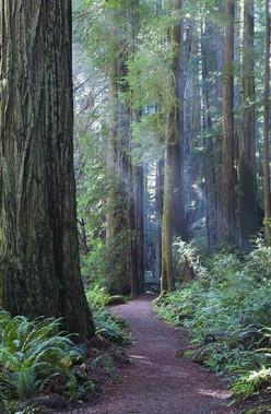 Humboldt Redwoods Park
