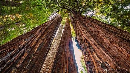 humboldt_redwoods_state_park_A.jpg