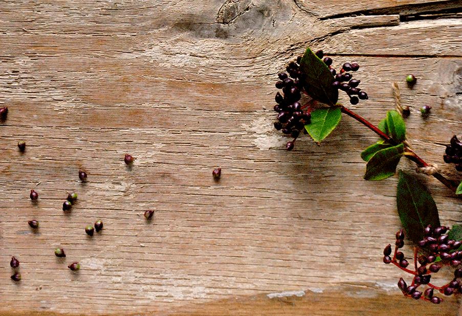 Vibernum Berries