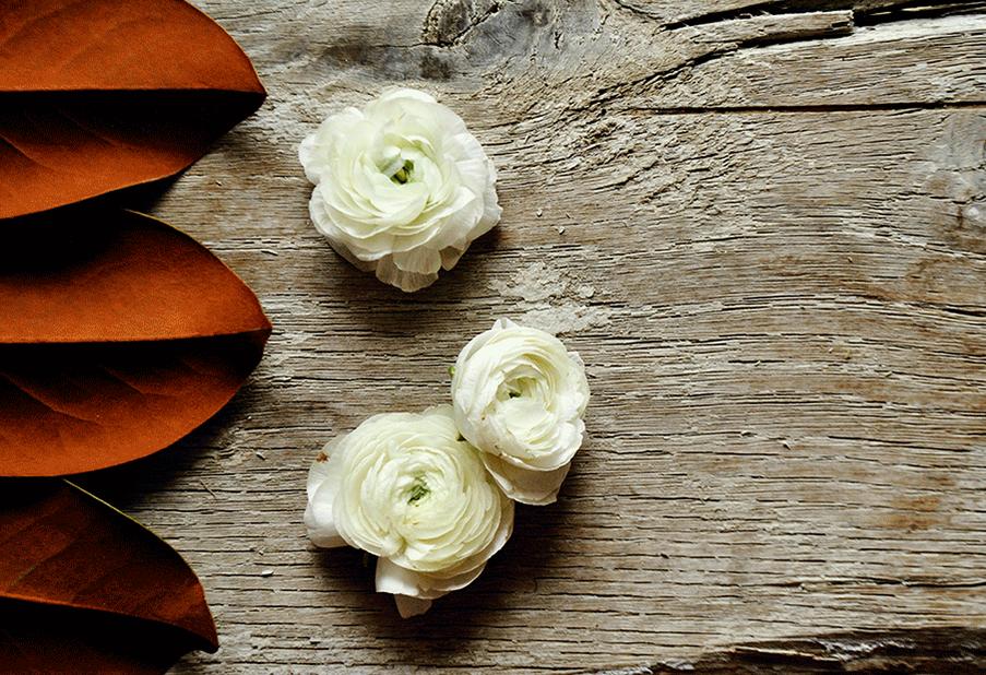 Ranunculus and Magnolia