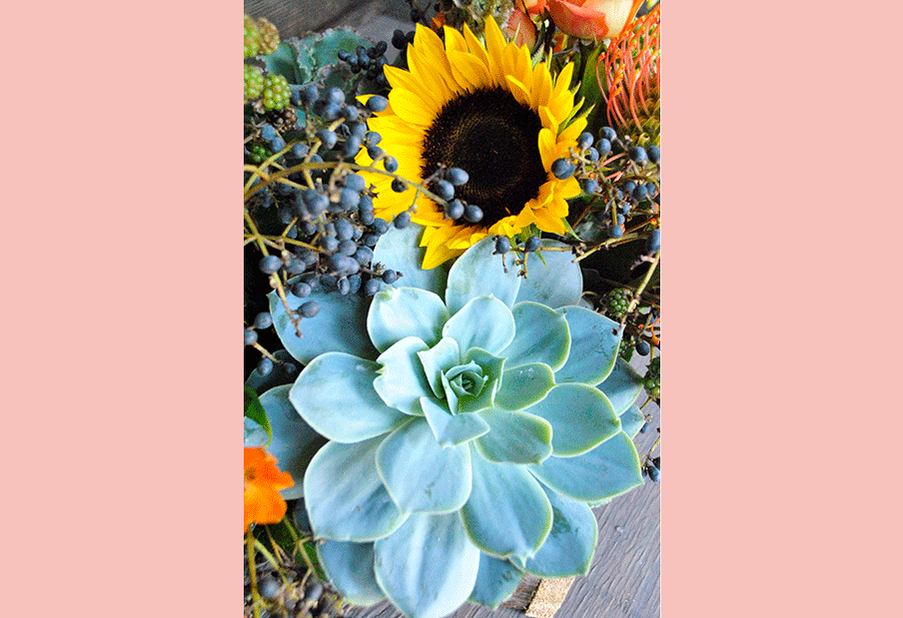 Sunflowers and Succulents 1
