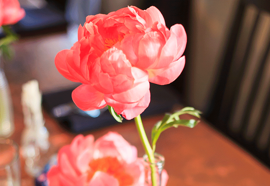 Focal Peony Blooms