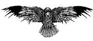 Illustration-corneille.png