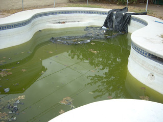 Before you can reopen the pool for summer swims, you need to clean out the gunk and restore the wate