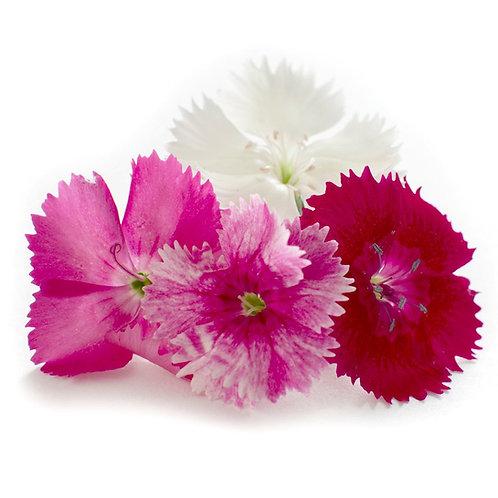 Dianthus Organic Edible Flower /Punnet
