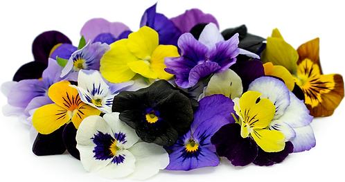 Viola Organic Edible Flower /Punnet