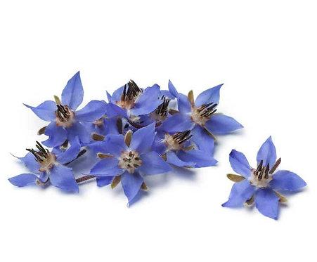Borage Organic Edible Flower /Punnet