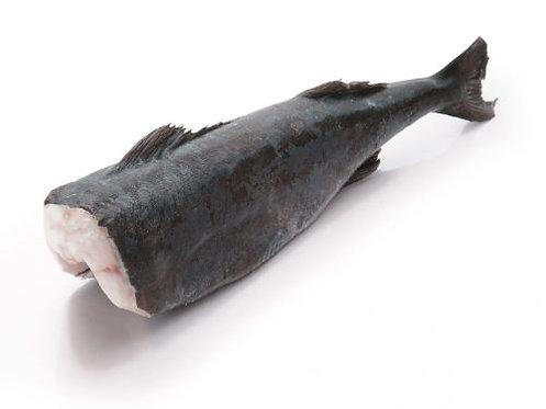 Wild Alaskan Black Cod Fish Headless (2.8kg/3.8kg)