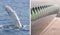 Whale Fin and Turbine