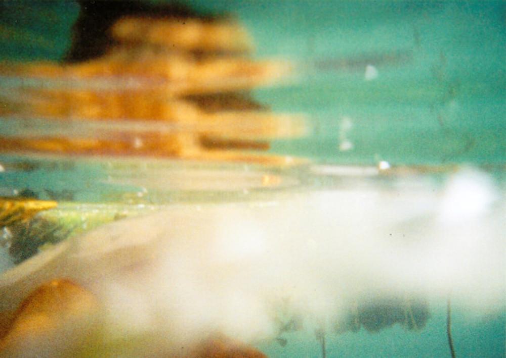 photo-scan-jellyfish-portaferry