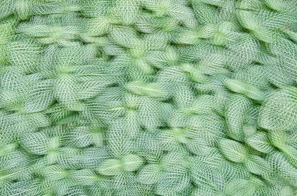 《Artificial view_botanical_2》