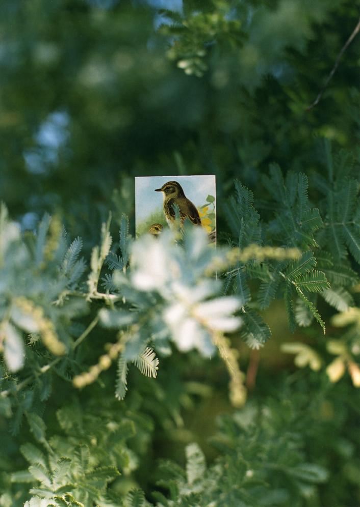 《BIRDS #16》